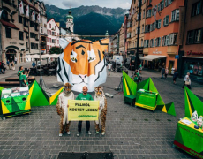 Greenpeace // Tiger Tour