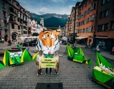Greenpeace // Tiger Tour