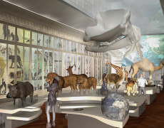 Natural History Museum Bordeaux // 3D renderings