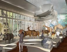 Naturkunde Museum Bordeaux // 3D-Renderings